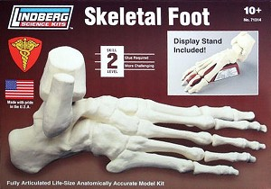 LIN71314  SKELETAL FOOT  - Fully articulated life-size anatomically accurate.